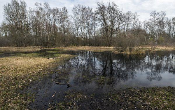 Mitigatie N18 in Aamsveen