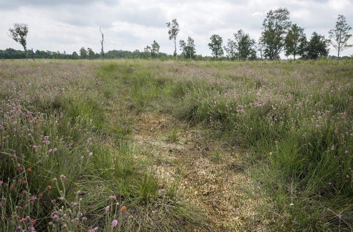 Aanpak Aamsveen – Hündfelder Moor